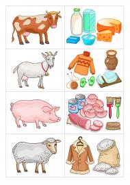 Еда домашних животных картинки