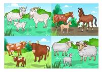 Парные картинки по теме «Домашние животные»