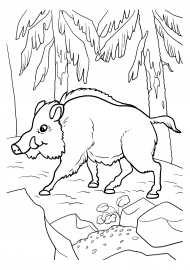 кабан раскраска животного скачать и распечатать животные