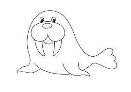 морж раскраска скачать и распечатать животные дикие