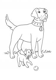 раскраска собака и щенок скачать и распечатать животные