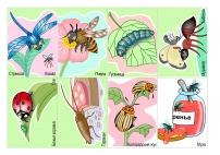 Чем питаются насекомые