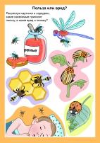 Польза и вред от насекомых