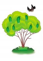 Как растут огурцы?