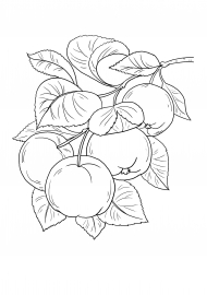 Яблоки на ветке. Раскраска — скачать и распечатать ...