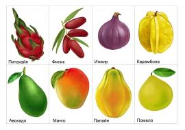 Тропические фрукты: финик, авокадо, манго, помело ...