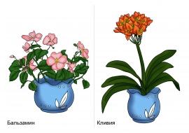 Картинки комнатных растений для детей — скачать и ...