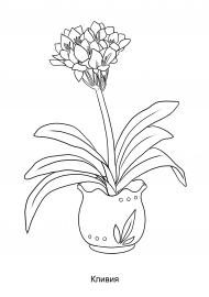 Кливия. Рисунок комнатного растения — скачать и ...