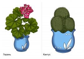 Герань и кактус. Картинки комнатных растений — скачать и ...
