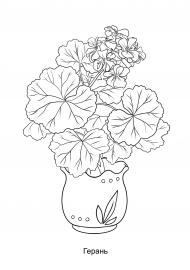 Герань. Раскраска — скачать и распечатать. Растения ...