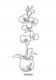 Орхидея. Раскраска — скачать и распечатать. Растения ...
