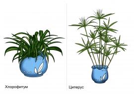 Циперус и хлорофитум.Комнатные растения — скачать и ...