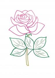 Раскраска розы с цветным контуром — скачать и распечатать ...