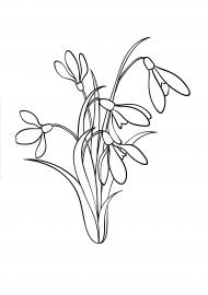 Подснежник, раскраска — скачать и распечатать. Растения ...
