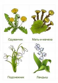 Первые весенние цветы: ландыш, подснежник, мать-и-мачеха, одуванчик — скачать и распечатать