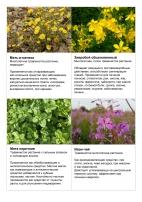 Лекарственные растения травы Зеленая аптека фитотерапия  Лекарственные растения травы Зеленая аптека фитотерапия Лекарства