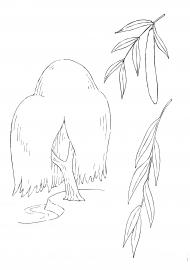 Ива: дерево, листья, семена — скачать и распечатать ...