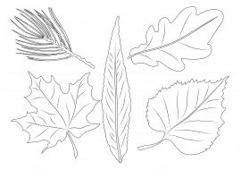 Картинки осенних листьев деревьев с названиями