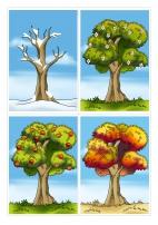 Дерево 4 сезона: весна, лето, осень, зима. Картинки-карточки
