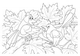 сороки на дереве раскраска скачать и распечатать