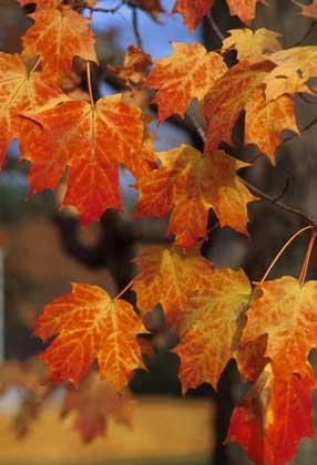 По теме деревья и кустарники осенью