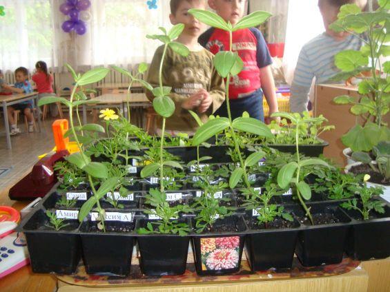 Фото и их название комнатные растения