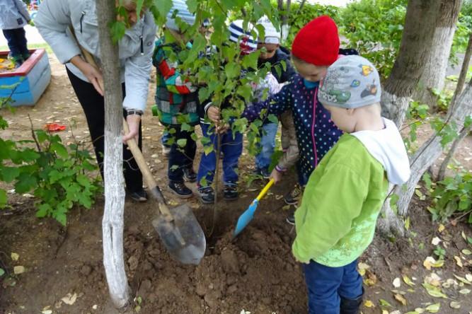 Когда в саду сажать деревья 972