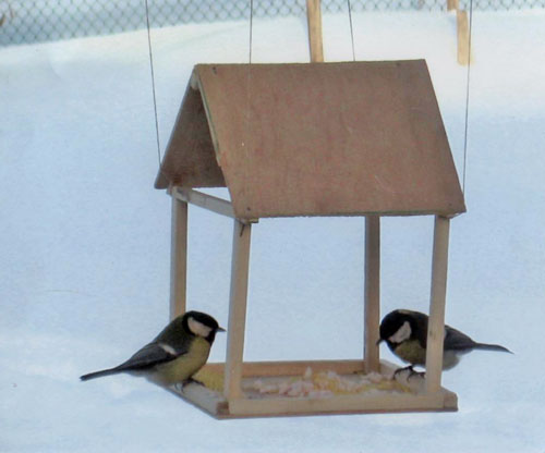 Простейшая кормушка для птиц своими руками