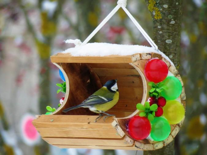 рассасывающихся смотреть фото фотоконкурса птицы на кормушке геометрии расцветки, качество