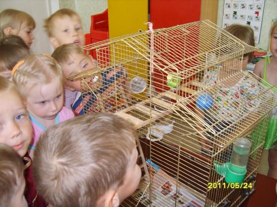 несколько удачных 10 экологических наюлюдений за попугаем можно езить