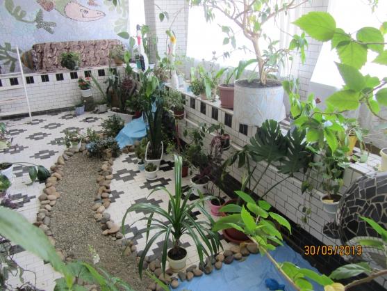 Зимний сад в доу своими руками 9