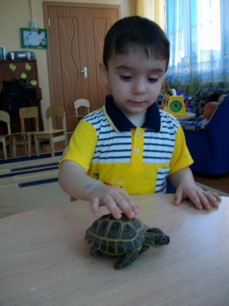 знакомство детей раннего возраста с окружающим миром