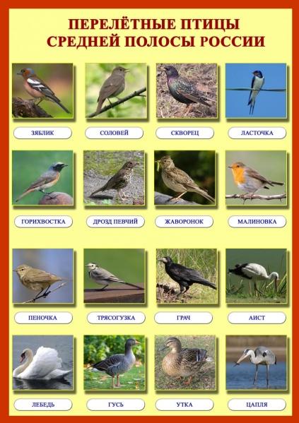 Картинки по запросу картинки перелетные птицы для детского сада