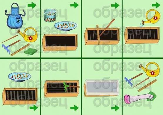 №1 схема посадки семян