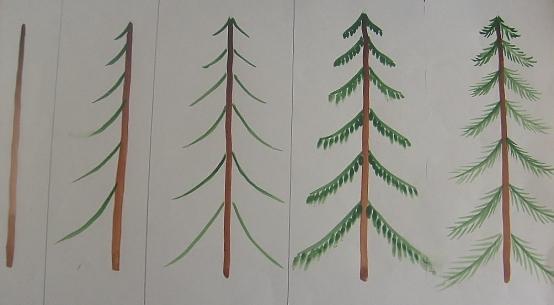 Книзу дерево утолщается