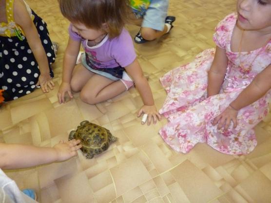 знакомство с домашние животные в детском саду