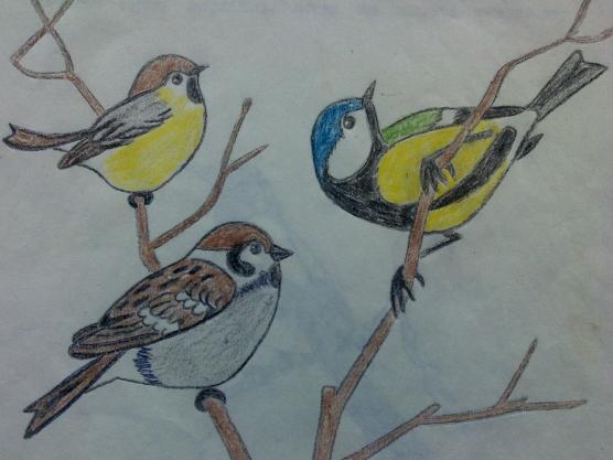 виды спорта, рисунки на тему зимующие птицы р-н ЛенинскийУслуги печника