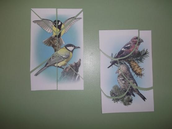 зимующие птицы беларуси фото