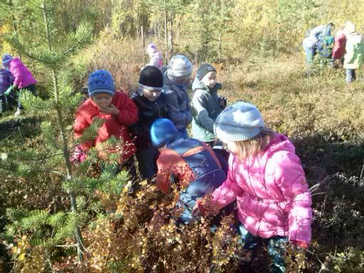 знакомство с природой в подготовительной группе