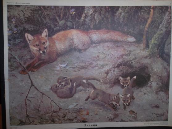 картинка лиса с лисятами для детей