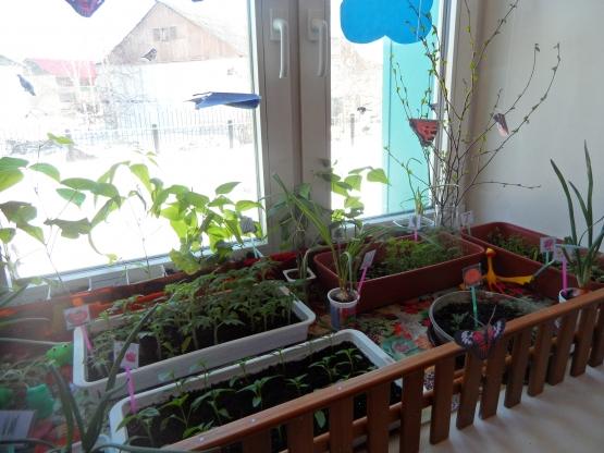 Огороды у нас получились в этом году