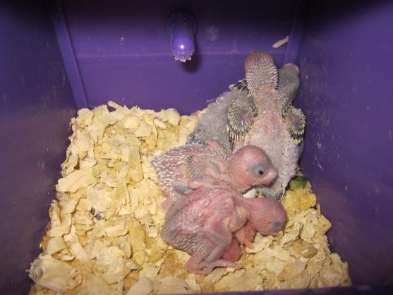цена 10 экологических наюлюдений за попугаем забывай силе