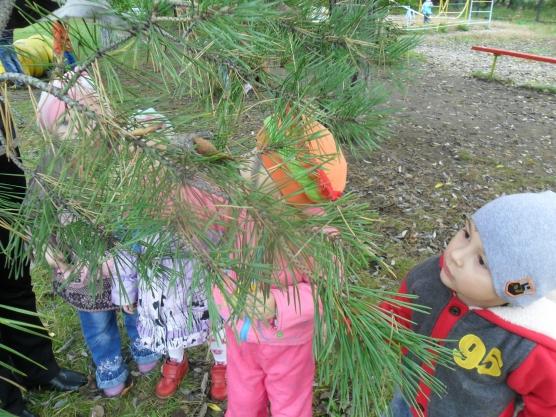 знакомство детей с природой и ее объектами