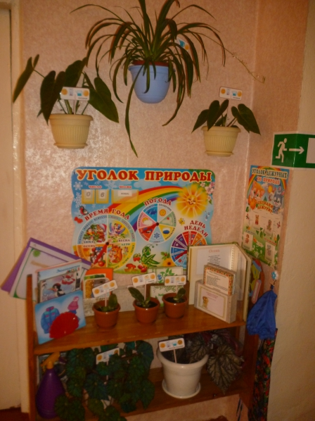 Уголки в детском саду своими руками уголки природы 45