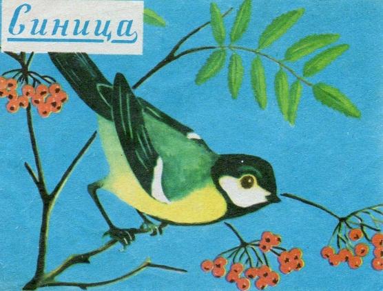 все о птицах иллюстрированный атлас книгу шаронов