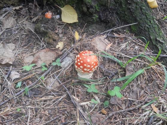 познакомится со строением гриба
