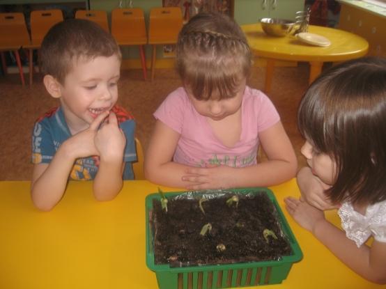Проект «Огород на подоконнике» (для детей 2 младшей группы ...