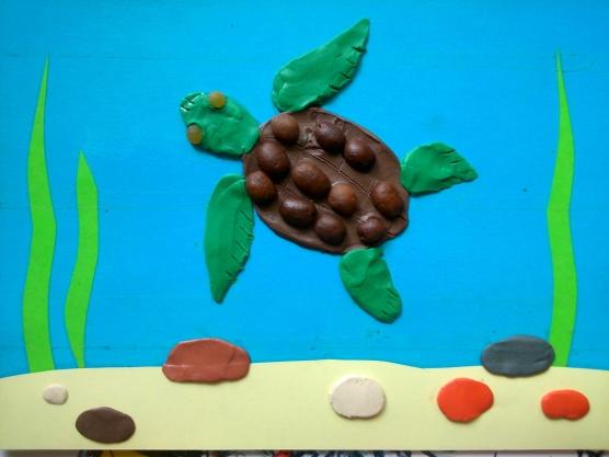 черепахи знакомство с черепахой