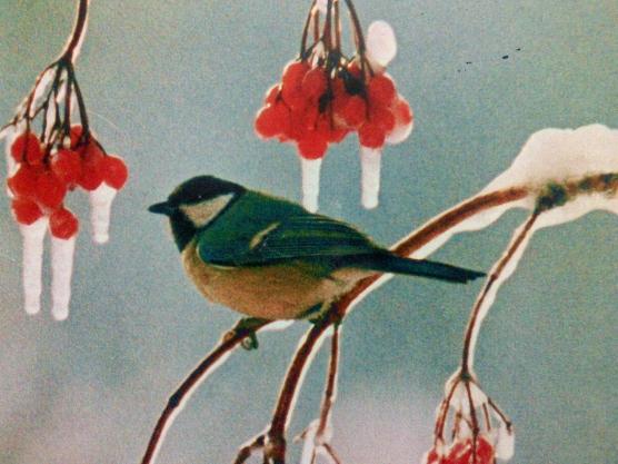Зимующие птицы старшая группа