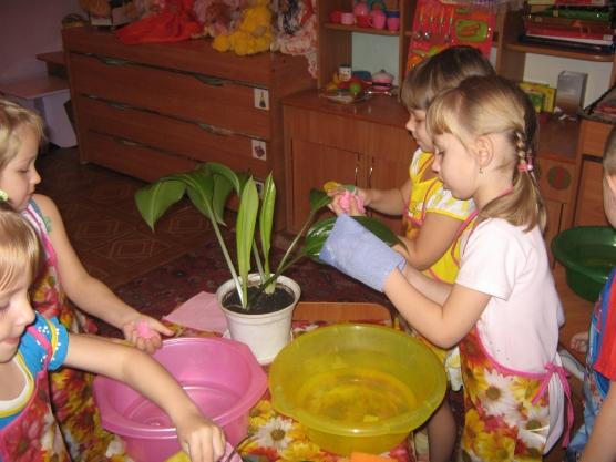 занятие игра знакомство с комнатными растениями